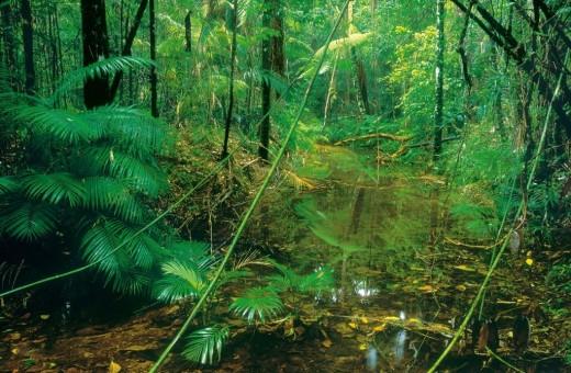 Rainforest undergrowth
